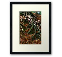 ROOTED TO THE GROUND Framed Print