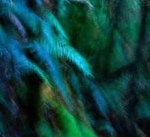 Fern Tree by Angelika  Vogel