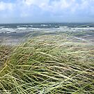 Kerry dune grass by morrbyte