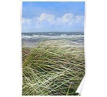 Kerry dune grass Poster
