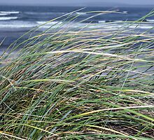 Kerry Ireland beale dune grass by morrbyte