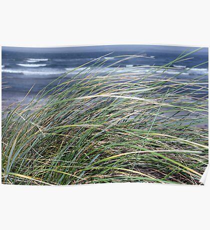 Kerry Ireland beale dune grass Poster