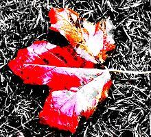 Leaf by Nik Watt