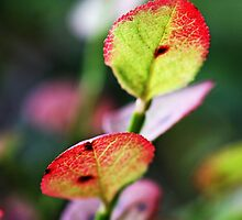 Blueberry leaves by MQ20