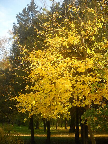 Autumn in The Park.Colours. by Vitta