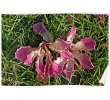 Fallen Flowers on the Grass Poster