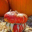 Turban Pumpkin by Chet  King