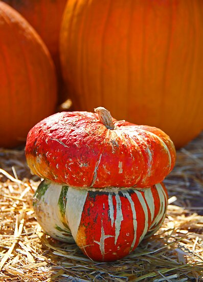 Turban Pumpkin by Chet  King