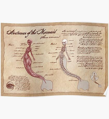 Anatomy of the Mermaid Poster