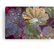 Colour manipulated raindrops on leaves  Metal Print