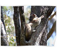 I'm A Hubbard's Sportive Lemur Poster