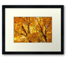 October Joy~ 2013 Framed Print