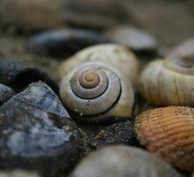 Shells by Éilis  Finnerty Warren