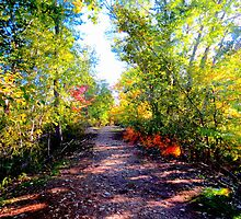 Just Follow The Path...Star Idaho by trueblvr