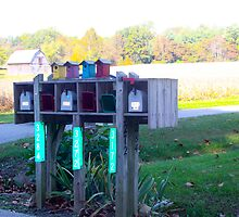 BIRDHOUSES FOR THE AIR MAIL by Pauline Evans