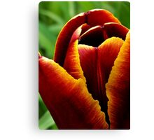 Tulip Flame Canvas Print