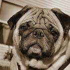 Mr. Wrinkle Face by Keala