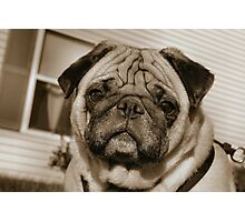Mr. Wrinkle Face Photographic Print