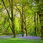 Never too old - to play amongst bluebells! by Charmiene Maxwell-batten