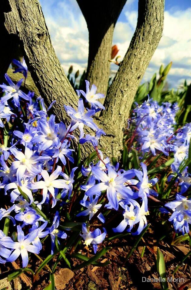 Pretty purple around a tree by Danielle Morin