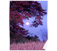 October Moon with Shingle Oak Poster