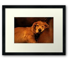 Couch Potato Framed Print