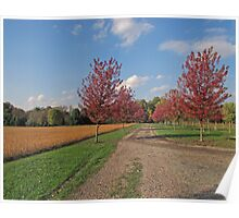 Pathway To The Winery Poster