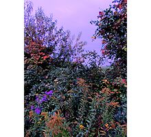 The Hedgerow in Autumn at Dusk Photographic Print