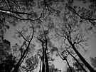 Scary Trees- Mount Lofty Summit by Ben Loveday