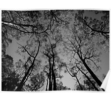 Scary Trees- Mount Lofty Summit Poster