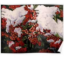 """Resilience""-- Winter Berries in Snow Poster"