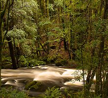Tasmanian river #2 by samg