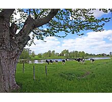 Country style Photographic Print