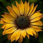 Botanical Sun by The Photo  Nursery