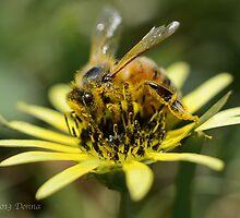 Bee-u-tifull Daisy by The Photo  Nursery