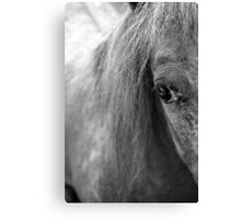 A Horse's Eye Canvas Print