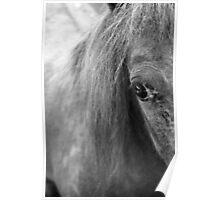 A Horse's Eye Poster