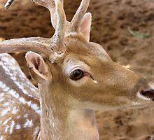 Gazelle by Omar Dakhane