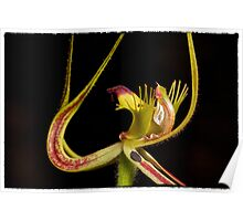 green spider orchid Poster