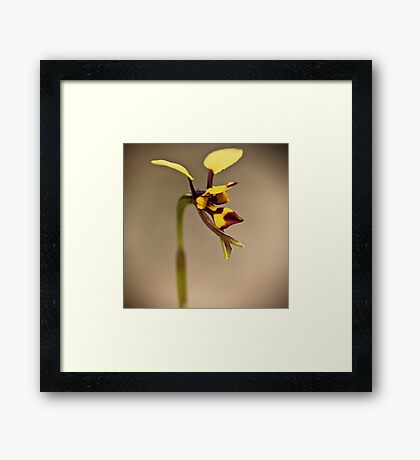 Bee Orchid Framed Print
