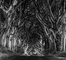 The Dark Hedges by Alan Owens