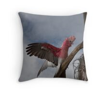 Male Gallah/Rose Breasted Cockatoo Throw Pillow