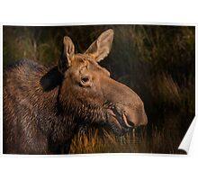 Moose portrait Poster
