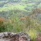 Nunimbah Valley in Spring by MardiGCalero