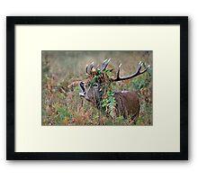 Crown of bracken Framed Print