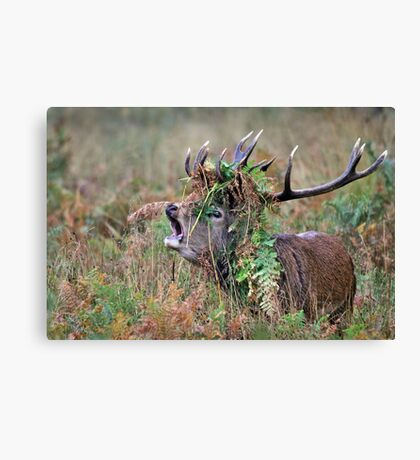 Crown of bracken Canvas Print