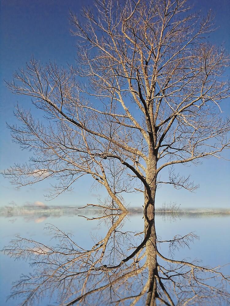 Sweetness of the Seasons by PineSinger