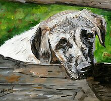 Anatolian Shepherd Dog by Oldetimemercan