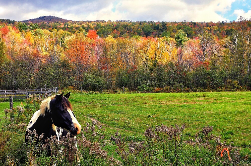 Frye, Maine by fauselr
