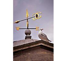 We Gull Photographic Print